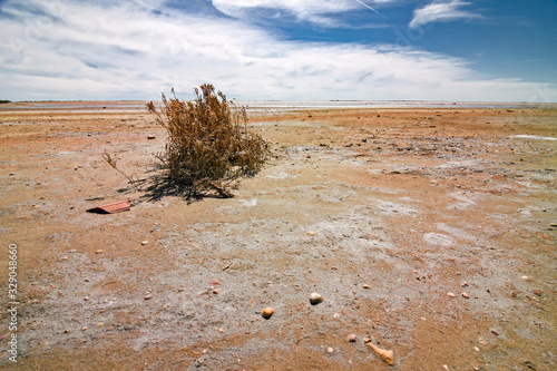 Slika na platnu Panoramic view of the sunny, deserted and scratched scrubland of the Camargue during the dry season, in France