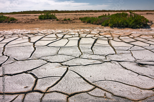 Fotografija Panoramic view of the sunny, deserted and scratched scrubland of the Camargue during the dry season, in France