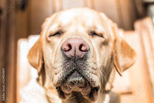 Foto Nariz, trufa, hocico de perro al sol