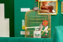 Parrot In Home Cage.