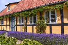 Traditional Half-timbered Yellow House In Nyker Village, Bornholm Island, Denmark