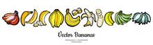 Bananas Set Vector Isolated. W...
