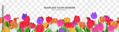 Colorful tulips flower on transparent background seamless border vector decoration, 3d floral frame template illustration #329103853