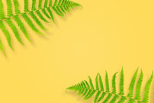 Fern Leaves On A Yellow Backgr...