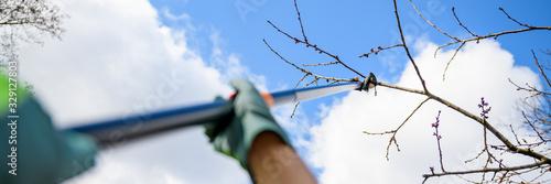 Obraz Unrecognizable man pruning fruit trees in his garden. Male gardener using telescopic pruning shears. Springtime gardening web banner. - fototapety do salonu