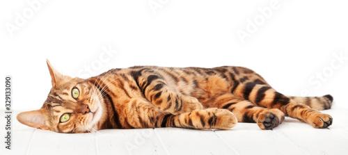 Bengal cat Tableau sur Toile