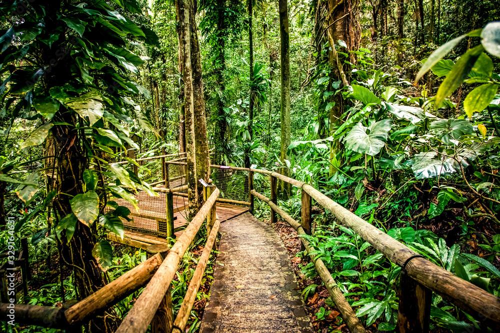 Fototapeta wooden path in rainforest tropical jungle background