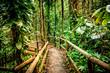 Leinwandbild Motiv wooden path in rainforest tropical jungle background