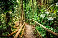 Wooden Path In Rainforest Trop...