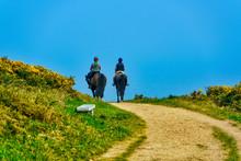 A Couple On Horseback Riding F...