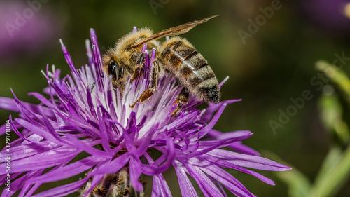 Cuadros en Lienzo Bee 130
