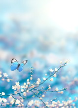 Cherry Blossoms Over Blue Nature Background. Spring Flowers. Spring Background With Bokeh. Butterfly.