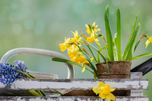 Flowers And Garden Tools On Ta...