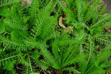 緑色の美しい葉っぱ