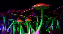 Color Magic Mushrooms - Psiloc...