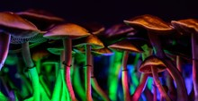 Color Magic Mushrooms - Psiloc...