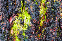 Texture Of The Bark Tree Trunk...