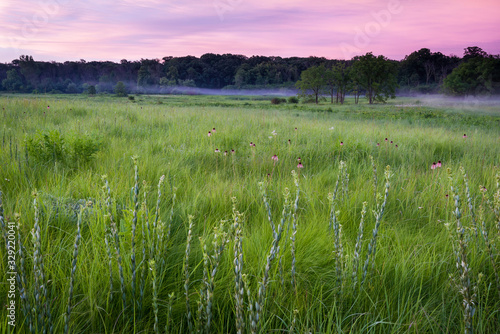 Photo Round-headed bush clover and purple coneflower rise above the prairie grasses at sunrise