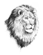 Lion Illustration Of Lion Head...