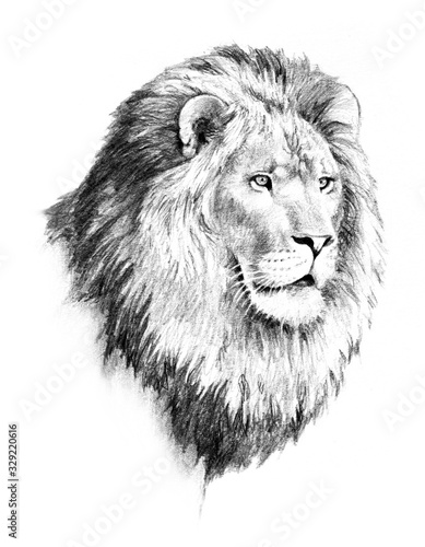 lion illustration of lion head and mane in hand drawn pencil sketch isolated on Wallpaper Mural