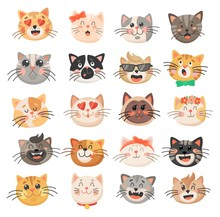 Cute Cat Faces, Kitten Or Kitt...
