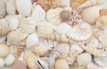 Seashells As Background, Sea S...