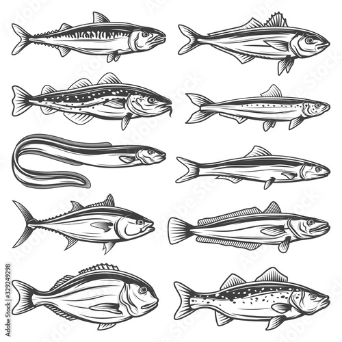 Fish species outline icons set Canvas Print