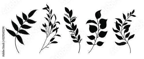 Fototapeta Set of leaves silhouette of beautiful plants, leaves, plant design. Vector illustration . obraz