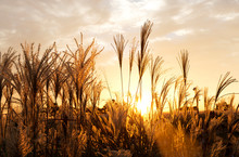 Flamegrass Silvergrass Reed Sunset Redsky Orangesky Evenig Glow Flaming Sunset Landscape Nature 석양 노을 억새 갈대밭