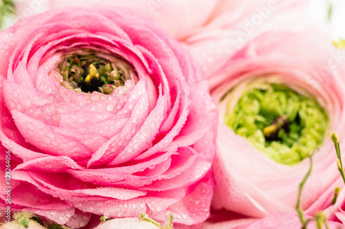 Fotografie, Obraz Persian buttercup
