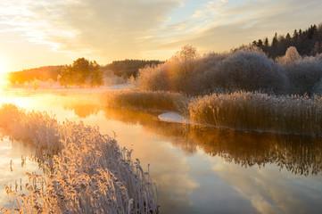Fototapeta Wschód / zachód słońca Frost covered reeds lining a stream at sunrise, Sweden.
