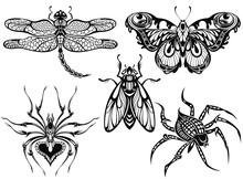 Insect Illustration.  Black Butterflies, Bug, Dragonfly Drawin,spider. Tattoo Sketch Set.
