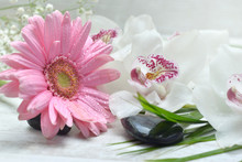 Close On Pink Daisy Covered With Water Drops And White Orchide On A Table