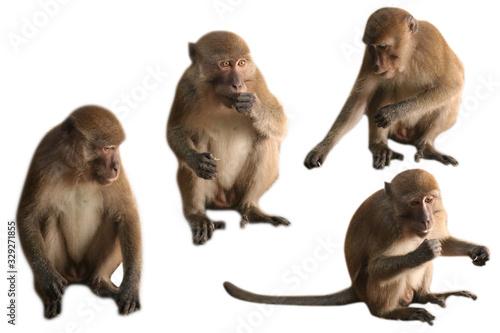 Four monkeys on a white background Wallpaper Mural