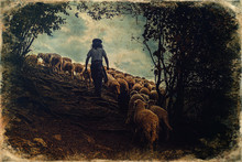Flock Of Sheep On Beautiful Mo...