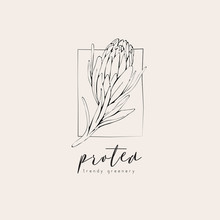 Protea Logo And Flowers. Hand ...