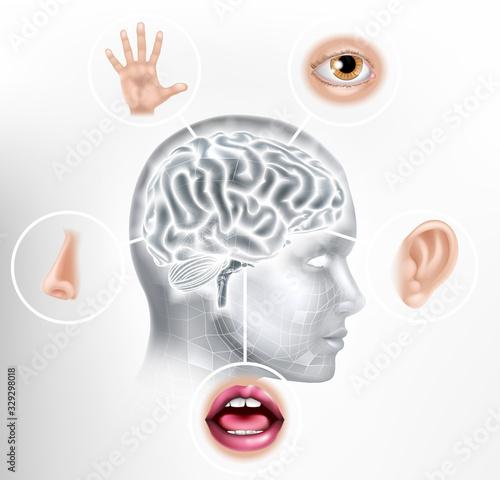 Foto Five senses brain AI human head artificial intelligence or learning technology c