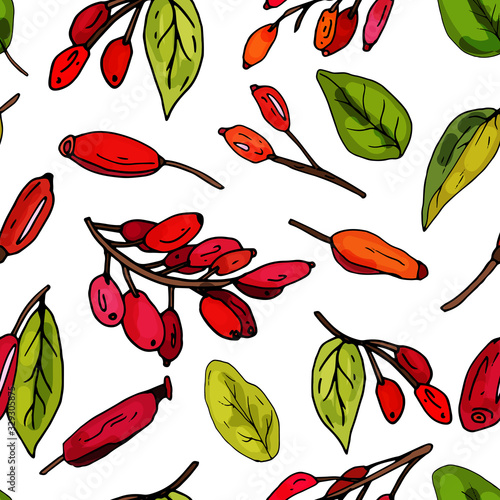 Seamless pattern on a white background from blooming barberry Canvas Print