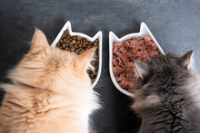 Top View Of Two Cats Eating Wet And Dry Pet Food From Ceramic Feeding Dish