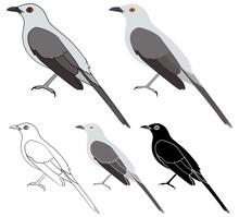 Sabia Da Praia Bird In Profile View