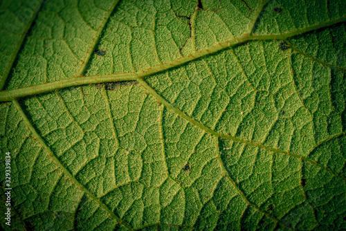 Green leaf closeup background #329339834