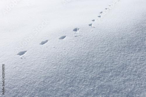 Valokuvatapetti 雪原_動物の足跡