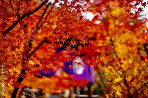 もみじ(紅葉) / 秋 の風景 - 329358282