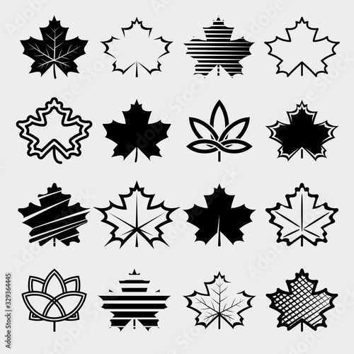 Maple leaf set. Collection icon maple leaf. Vector Canvas