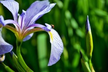Ladybug On A Purple And Yellow...