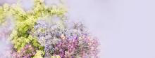 Lilac Flowers Bloom Branch Pan...