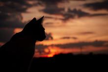 Gato No Pôr-do-sol