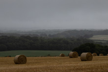 Round Hay Bales In A Field Wit...