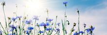 Wild Flowers On Sunny Blue Sky...