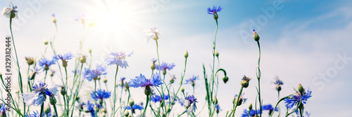 Wild flowers on sunny blue sky, spring meadow - 329382444
